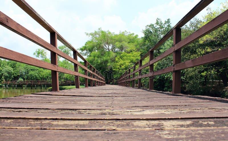 Traînez pour que marcher apprenne la nature dans la forêt tropicale photo stock