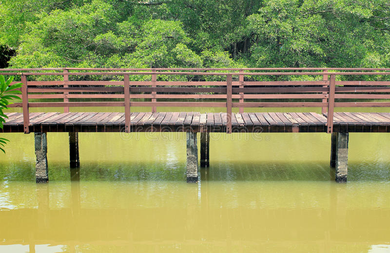 Traînez pour que marcher apprenne la nature dans la forêt tropicale photos stock
