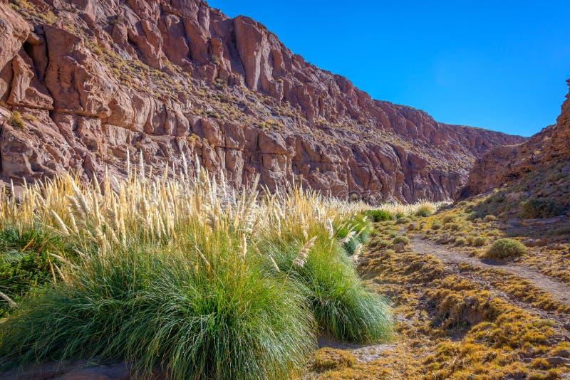 Traînez près de la rivière de Puritama, désert d'Atacama, Chili photos libres de droits