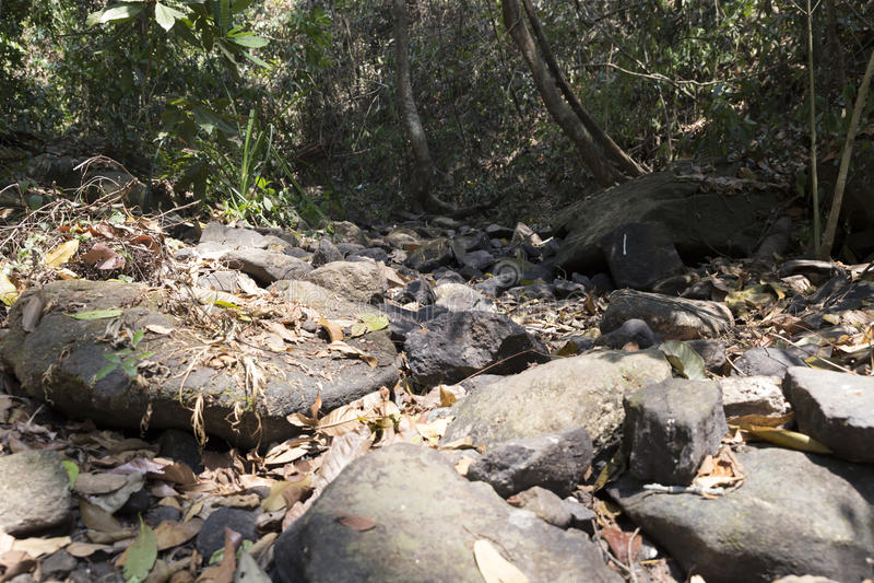 traînez sur la colline dans la forêt pour la hausse ou le trekking image stock