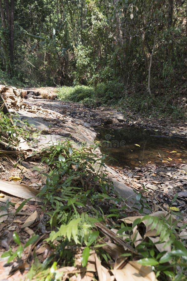 traînez sur la colline dans la forêt pour la hausse ou le trekking images stock