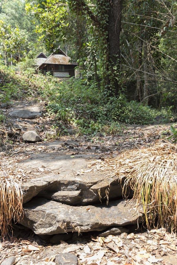 traînez sur la colline dans la forêt pour la hausse ou le trekking photos libres de droits
