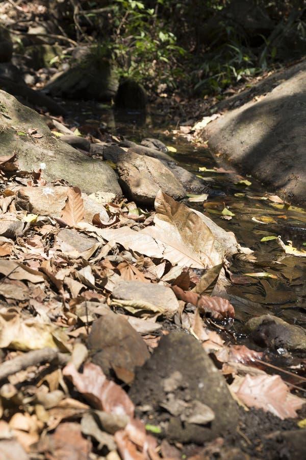 traînez sur la colline dans la forêt pour la hausse ou le trekking images libres de droits
