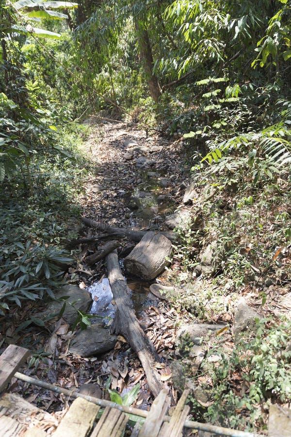 traînez sur la colline dans la forêt pour la hausse ou le trekking photo stock