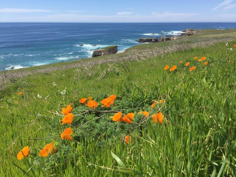 Tra?n?e de Buchon de point - wildflowers, bluffs et cavernes avec la vue d'oc?an image libre de droits