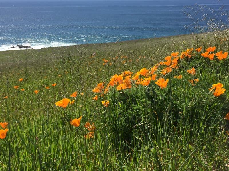 Tra?n?e de Buchon de point - wildflowers, bluffs et cavernes avec la vue d'oc?an image stock