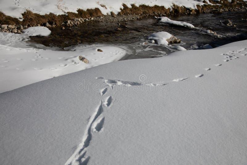 Tra?os de animais na neve Cervos, alces, lobo, raposa, c?o, pegadas das patas do gato na floresta imagens de stock royalty free