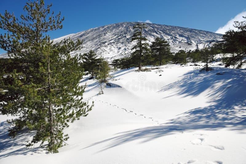 Tra?os de caminhante com as c?pias dos sapatos de neve na neve foto de stock royalty free