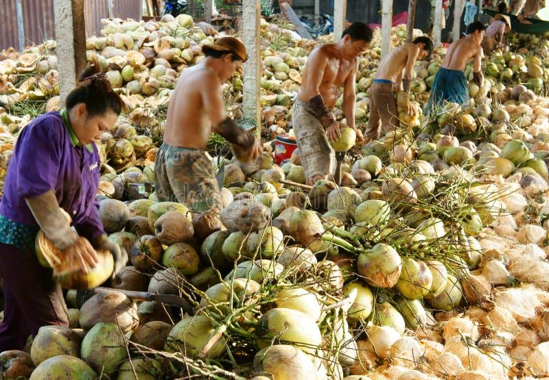 Trabajador asiático, coco, vietnamita, delta del Mekong imagenes de archivo