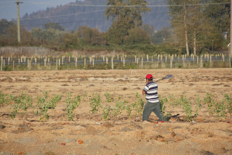 Trabajador de granja migratorio apagado a trabajar fotografía de archivo