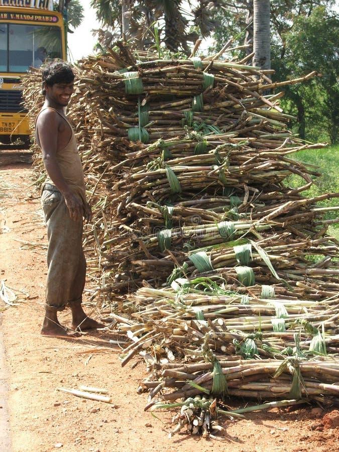Trabajador de la caña de azúcar después del tsunami 2004 fotos de archivo libres de regalías