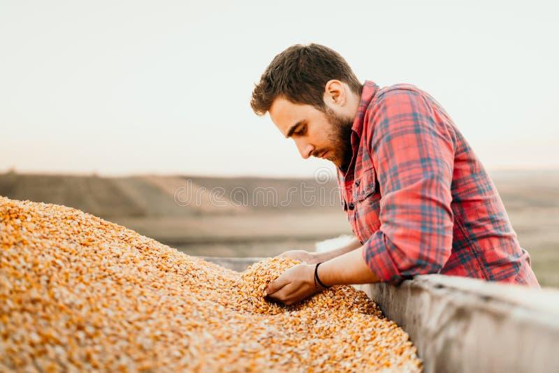 Trabajador de sexo masculino de la granja que lleva a cabo la producción del maíz en tractor remolque fotos de archivo libres de regalías