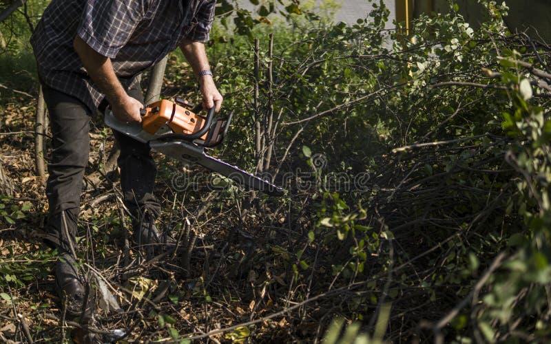 Trabajador del maderero del leñador en árbol de la madera de la leña del corte en bosque con la motosierra anaranjada foto de archivo
