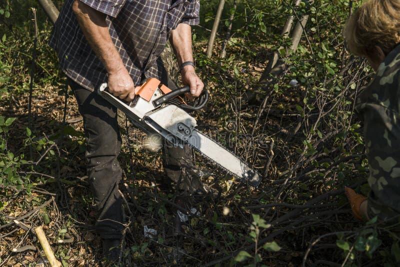 Trabajador del maderero del leñador en árbol de la madera de la leña del corte en bosque con la motosierra anaranjada fotografía de archivo
