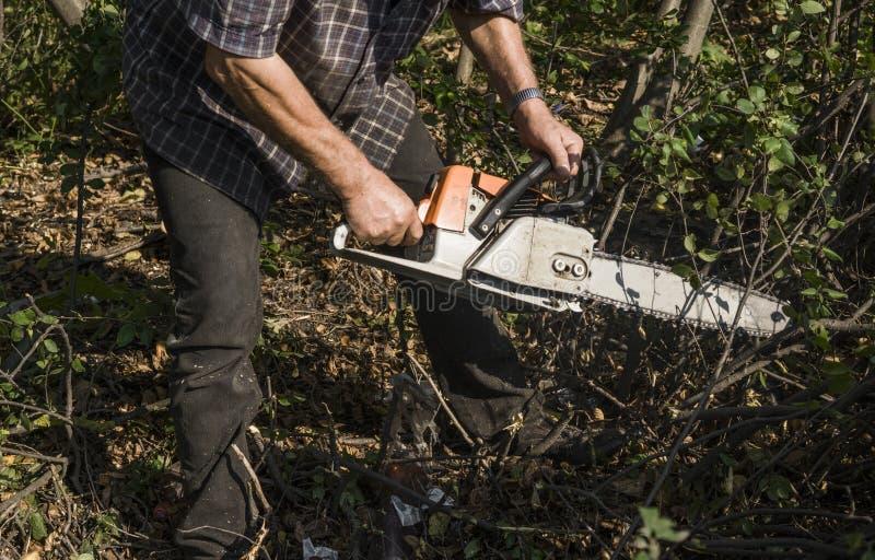 Trabajador del maderero del leñador en árbol de la madera de la leña del corte en bosque con la motosierra anaranjada fotografía de archivo libre de regalías