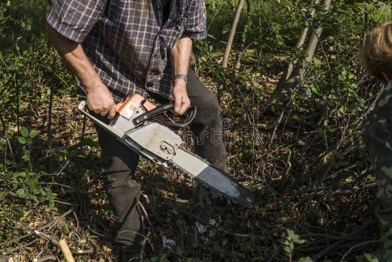 Trabajador del maderero del leñador en árbol de la madera de la leña del corte en bosque con la motosierra anaranjada foto de archivo libre de regalías