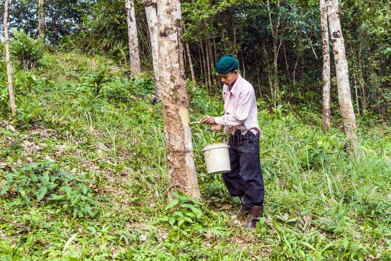 Trabajador en una plantación del árbol de goma en Tailandia fotografía de archivo libre de regalías
