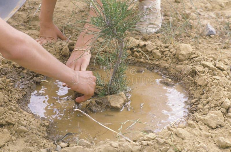 Trabajadores ambientales que plantan un árbol fotos de archivo