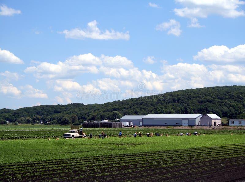 Trabajadores de granja fotos de archivo