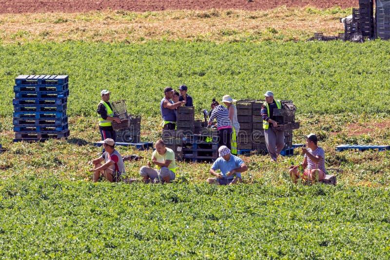 Trabajadores de granja migratorios imagenes de archivo
