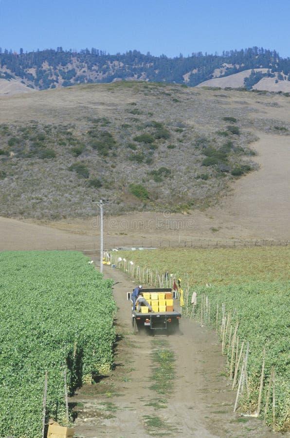 Trabajadores emigrantes que conducen un camión en San Joaquin Valley fotografía de archivo