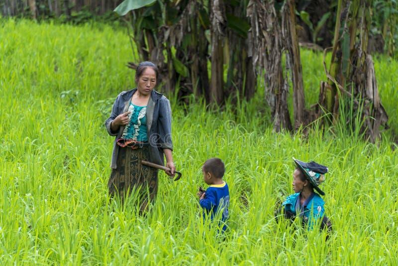 Trabajadores en campo del arroz fotografía de archivo