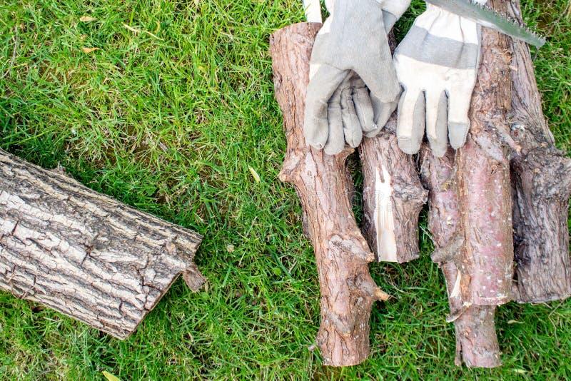 Trabajando en jardín, un mann que asierra un zoquete de la madera imagen de archivo
