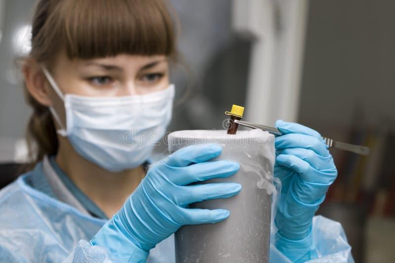 Trabajo con las muestras congeladas en laboratorio biológico imagen de archivo