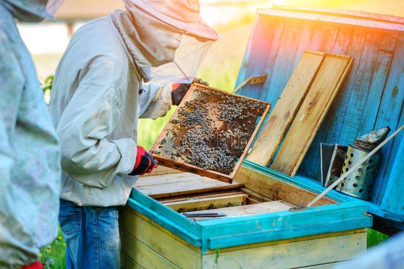Trabajo de dos apicultores sobre un colmenar Verano fotos de archivo libres de regalías