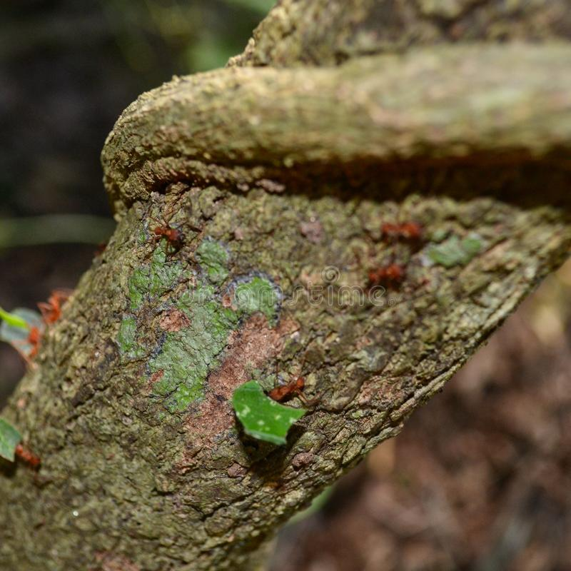 Trabajo de las hormigas fotos de archivo