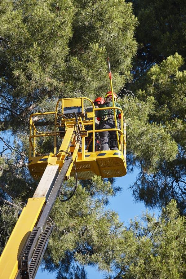 Trabajo del árbol, operaciones de la poda Bosque de madera de la grúa y de pino imagen de archivo