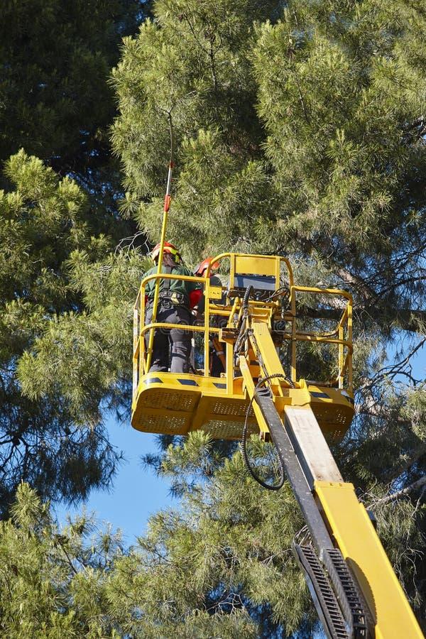 Trabajo del árbol, operaciones de la poda Bosque de madera de la grúa y de pino fotografía de archivo libre de regalías