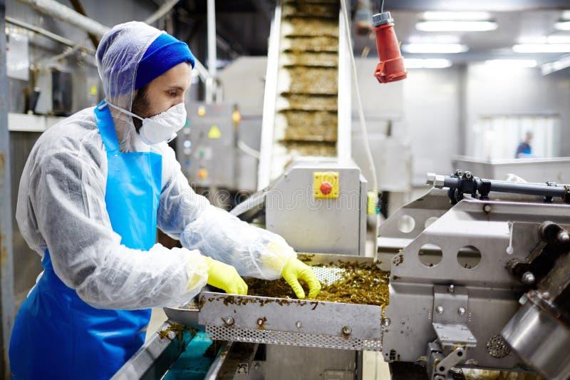 Trabajo en fábrica de los mariscos fotografía de archivo libre de regalías
