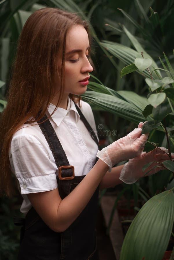 Trabajo femenino del jardinero en jardín botánico foto de archivo
