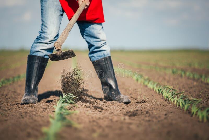 Trabajo manual en agricultura foto de archivo libre de regalías