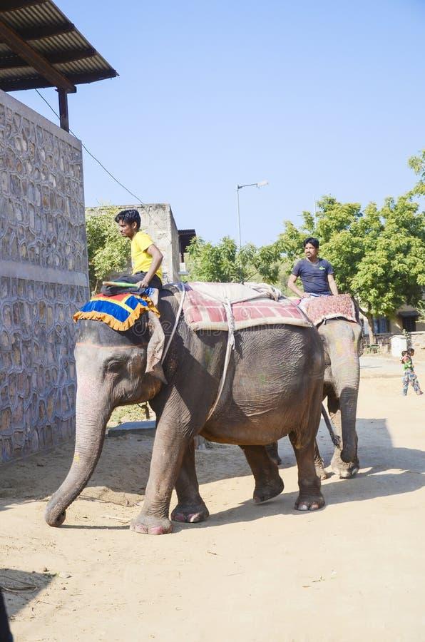 Trabajo para los turistas, Jaipur, la India del elefante fotos de archivo