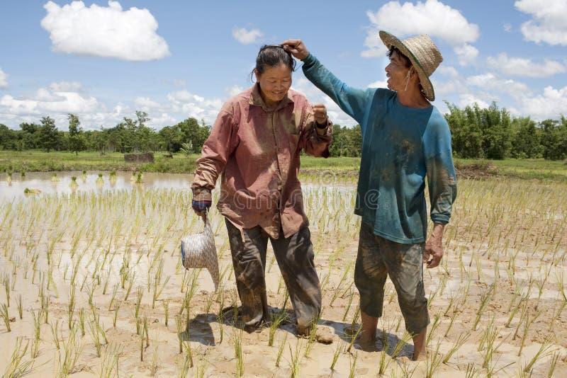 Trabajo sobre el campo de arroz, Asia foto de archivo