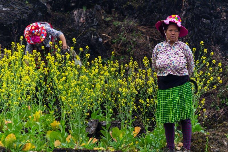 Trabalhador agrícola da minoria étnica de Hmong fotografia de stock royalty free