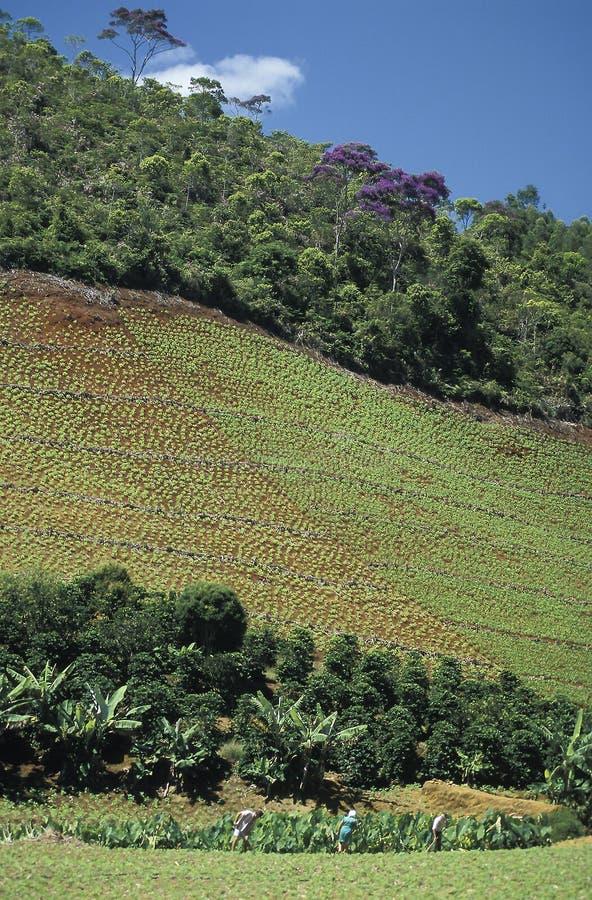 Trabalhador agrícola e desflorestamento em Brasil fotografia de stock
