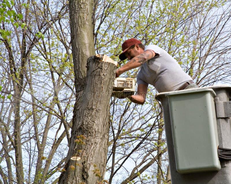 Trabalhador da árvore fotografia de stock