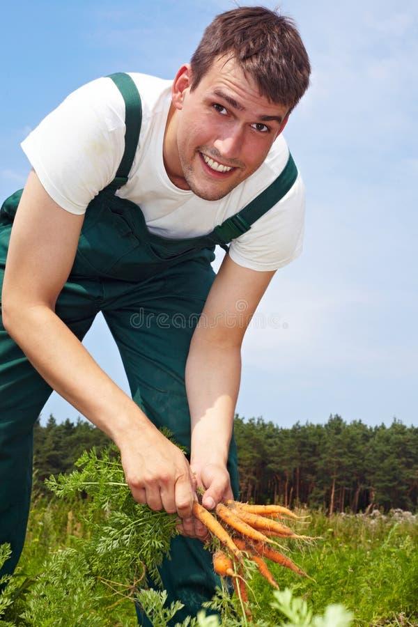 Trabalhador de exploração agrícola sazonal fotografia de stock royalty free