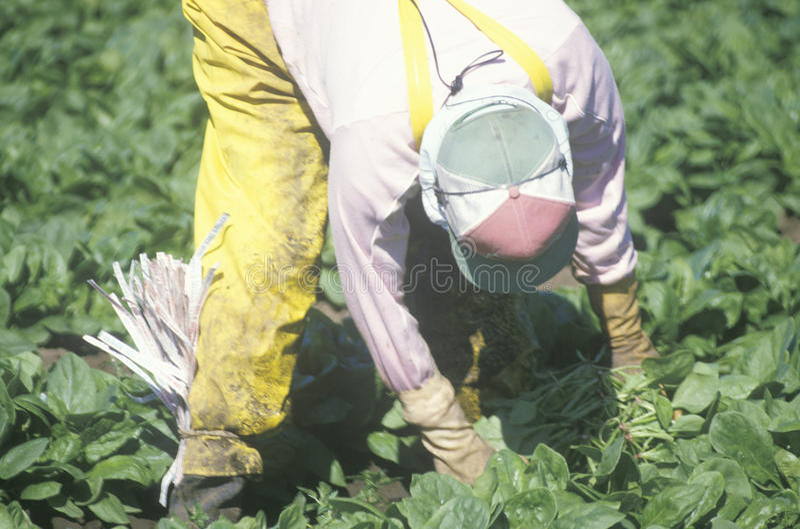 Trabalhador do fazendeiro emigrante fotografia de stock
