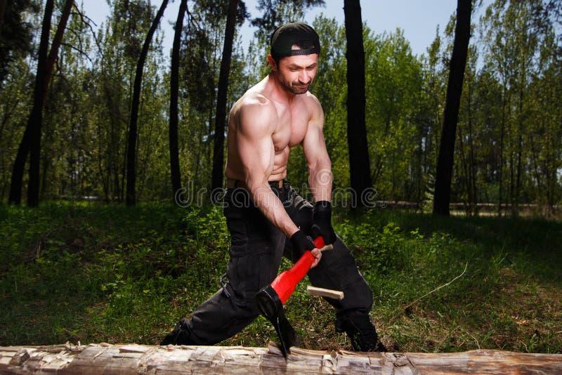 Trabalhador do lenhador desbastando abaixo de uma interrupção da árvore muita o splinte fotos de stock