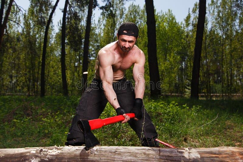 Trabalhador do lenhador desbastando abaixo de uma interrupção da árvore muita o splinte fotografia de stock royalty free