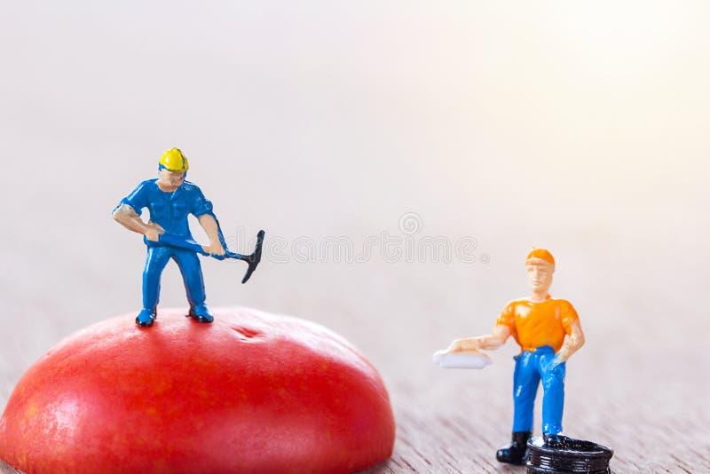 Trabalhador e contramestre que estão no tomate vermelho com luz solar fotos de stock royalty free