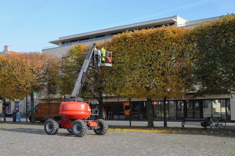 Trabalhador equipado que poda uma árvore em um guindaste Jardinagem imagem de stock