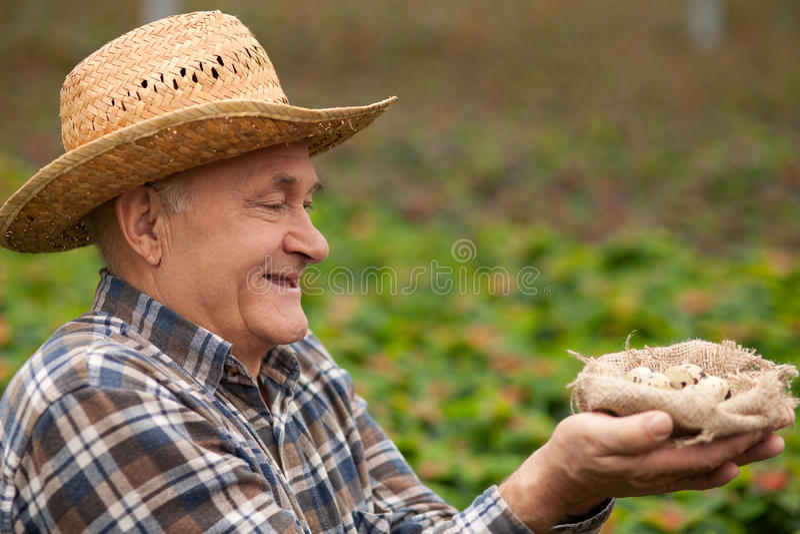 Trabalhador masculino idoso alegre com produto orgânico fotografia de stock royalty free