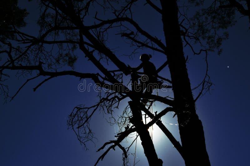 Trabalhador na árvore imagens de stock royalty free