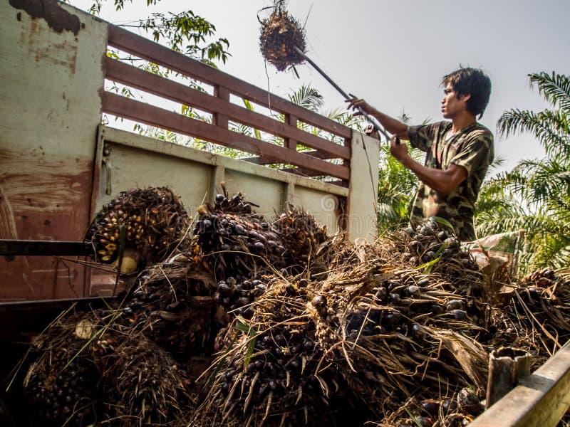 Trabalhador na plantação do plam do óleo fotos de stock royalty free