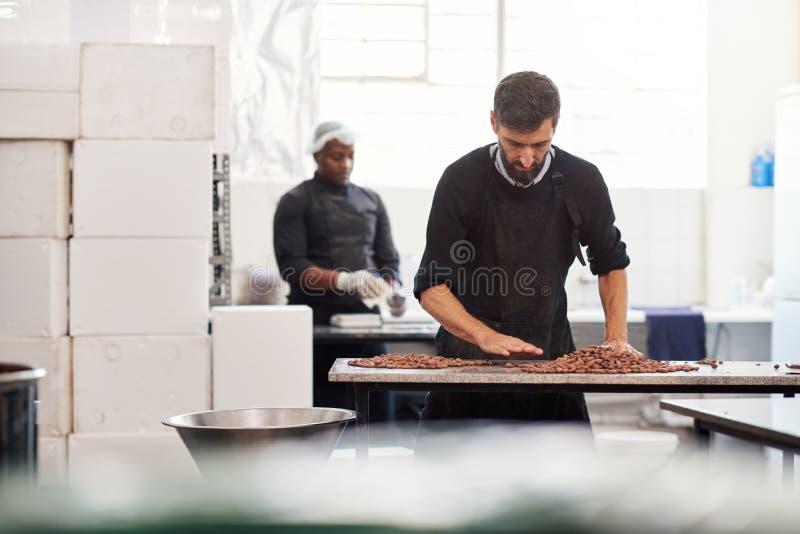 Trabalhador que classifica feijões do cocao da qualidade para a produção da fatura de chocolate imagens de stock royalty free